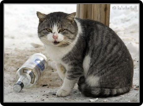 Sarhoş kediler