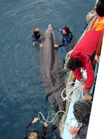 Türkiye sularında ilk kez görüldü