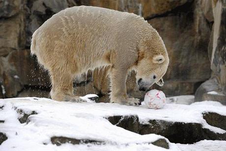 Soğuklar Knuta yaradı