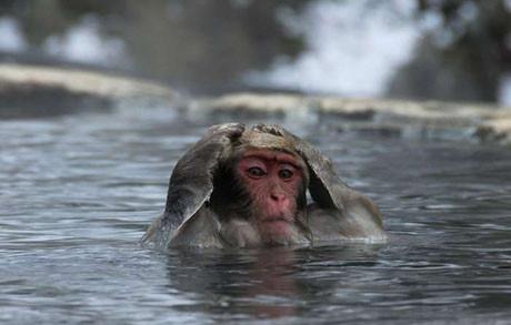 Maymunların banyo keyfi