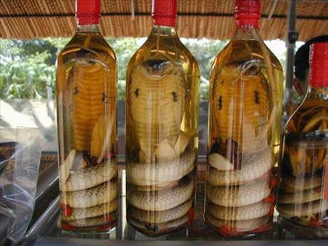Yılan şarabı içmek isteyen ?
