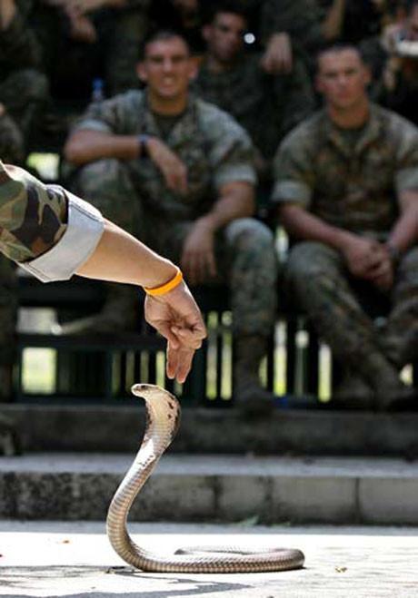 Askerlerin yılanla dansı