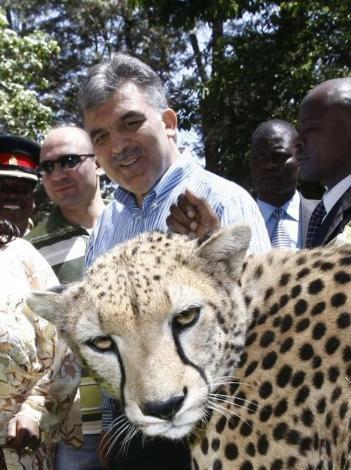 Cumhurbaşkanı Gül safaride