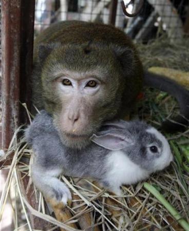 Hayvanların inanılmaz dostlukları