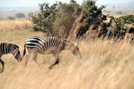Gülün objektifinden safari