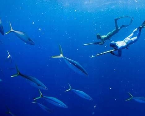 Köpekbalığıyla boğuştu !