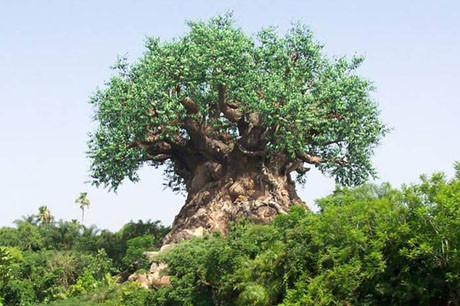 Dünyanın en gizemli ağacı