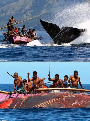 Balina avının dehşet veren görüntüleri