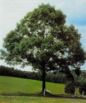 Siz hangi ağaçsınız ?