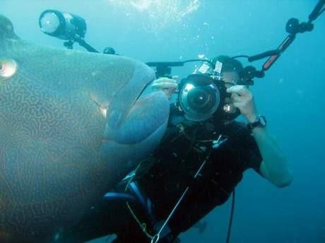 Su altındaki ilginç yaşam