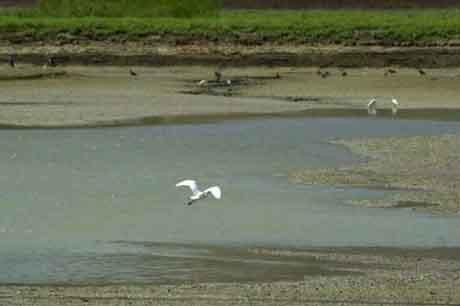Kuş cenneti kuraklık yüzünden tarla oldu