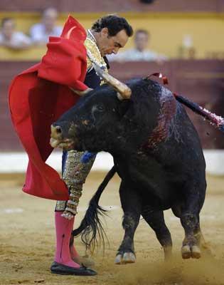 Boğa, matadoru madara etti