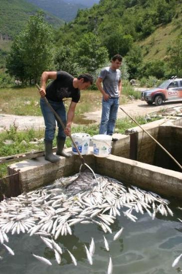 Trabzonda balık katliamı