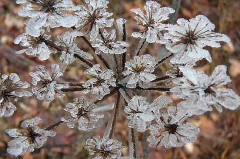 Buz çiçeklerin oluşumu