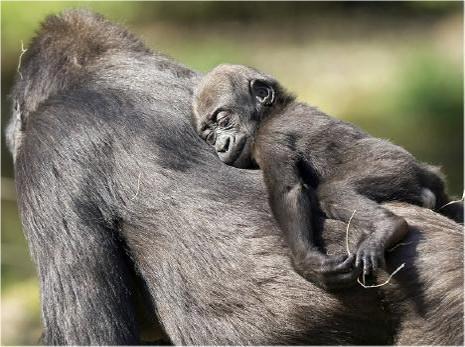Hayvanların bebeklik halleri