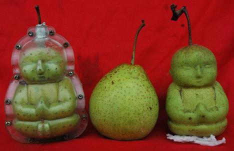 Meyveler evrim geçirdi !