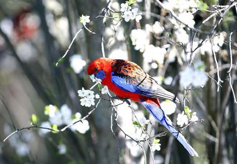 Doğanın canlı renkleri