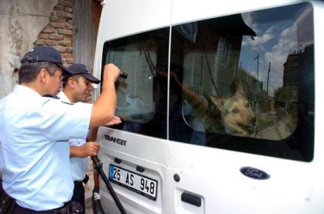 Operasyona köpek engeli !