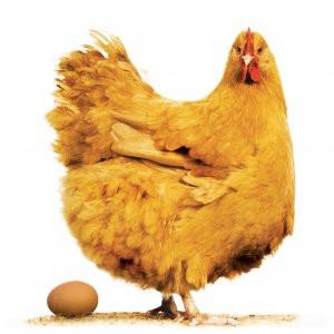 Kritik tavuk ve yumurta uyarısı