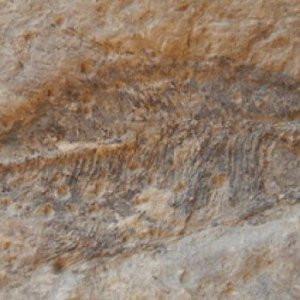 60 milyon yıllık fosil !