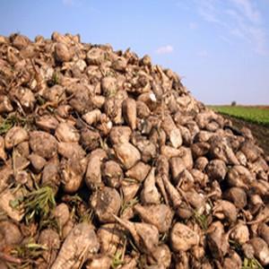Çiftçiye müjde ! Şeker pancarına rekor fiyat