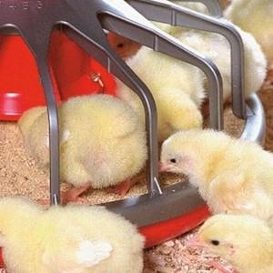 GDO'lu tavuk yemlerine Türkiye'ye giriş izni verildi !