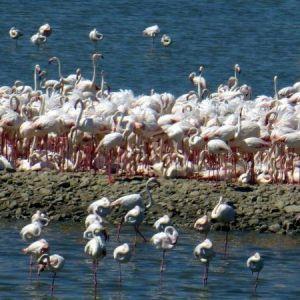İzmir Kuş Cenneti'nde ilginç görüntü