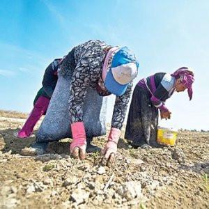 Suriyeliler Türklerin işlerini elinden alıyor !
