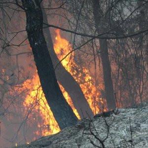 Aydın'daki yangın ormanlık alana sıçradı !