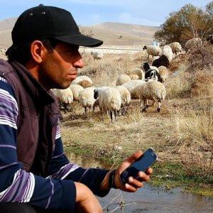 Koyunlara cep telefonundan kaval dinletiyor