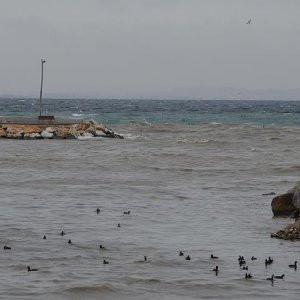 Yalova'da korkutan gelişme! Denizin rengi değişti