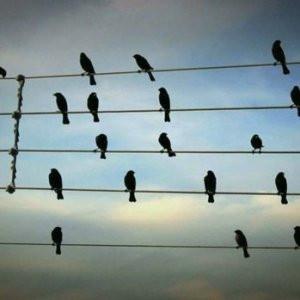 Sonunda çözüm bulundu! Kuşlar artık çarpılmayacak