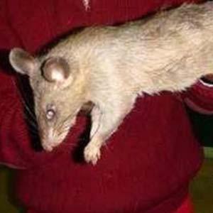 Dehşete düşüren olay: Bebeği fareler yedi