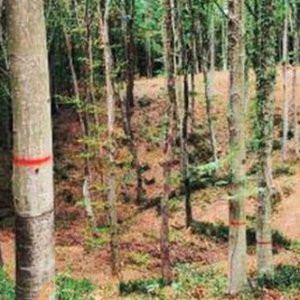 Belgrad Ormanı'nda işaretler hakkında açıklama