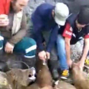 Ayıyı vurup parçalayan 6 kişiyi video ele verdi