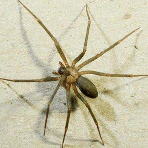 Örümcek zehrindeki mucize ortaya çıktı