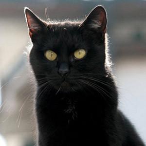 Trabzonspor'da kara kedi ve büyülü bayrak iddiası