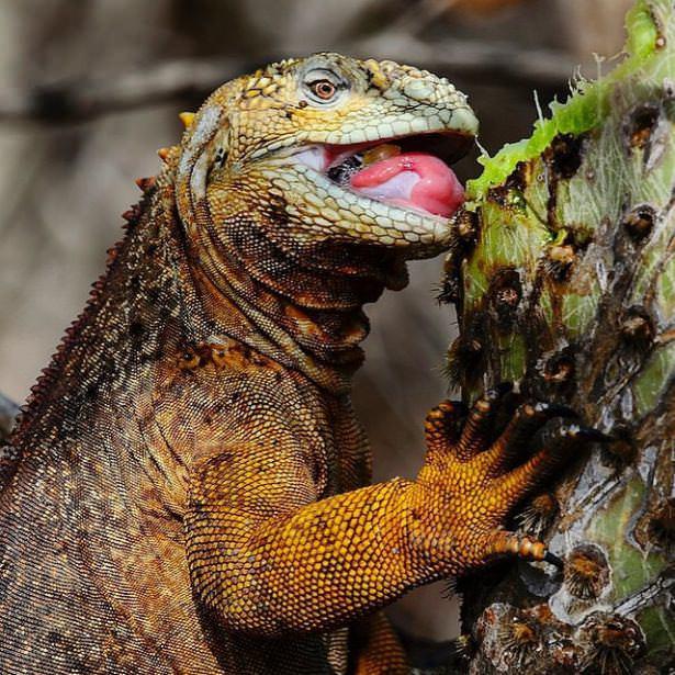 Vahşi doğadan çarpıcı fotoğraflar