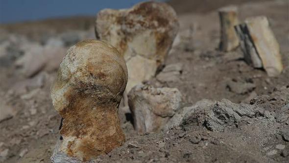 Keçi çobanı buldu... 6 milyon yıllık