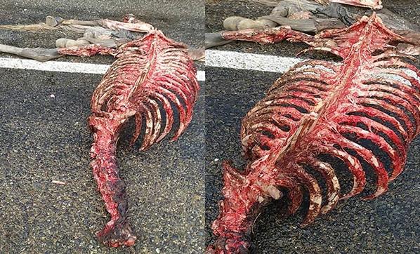 Attan geriye sadece iskeleti kaldı
