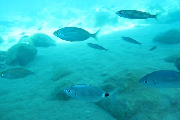 ''Antalya'nın Maldivleri'' tehdit altında - Resim: 2