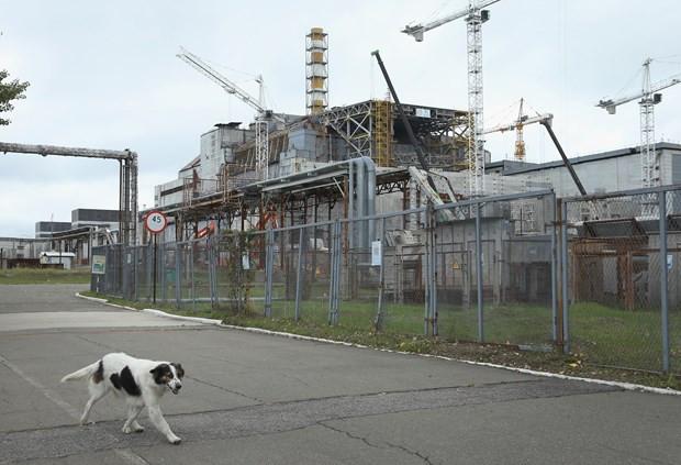 Çernobil'in sokak hayvanlarına ne oldu ? - Resim: 1