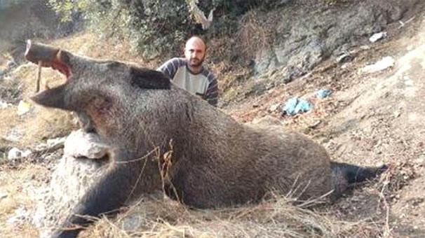 Ayı büyüklüğünde domuz vurdular !