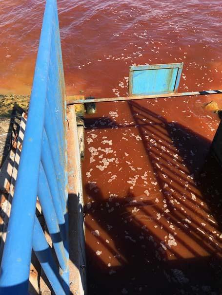 İzmir'de deniz kırmızıya boyandı - Resim: 2