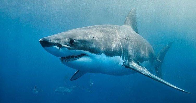 Plajda köpek balığı dehşeti