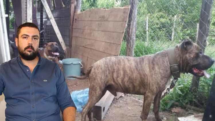 Pitbull dehşeti ! Polis operasyonuyla kurtarıldı