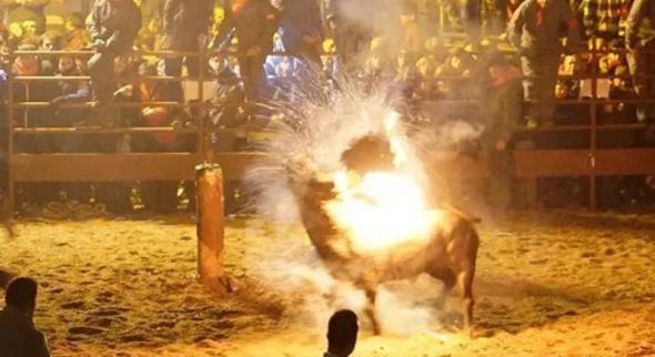 Canlı hayvanı ateşe verdiler Korkunç olay !