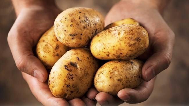 Patatesin kilosu 25 TL'ye yükseldi