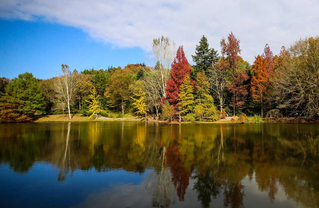 Canlı ağaç müzesinde sonbahar