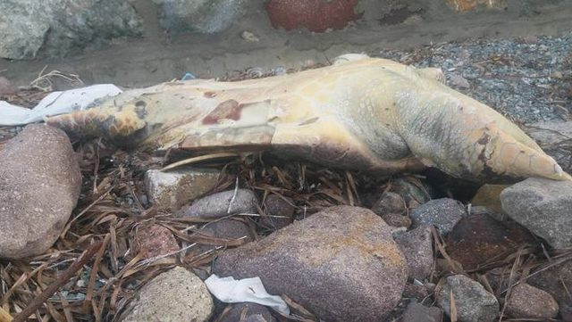 Bodrum'da üzücü haber ! Ölü bulundu